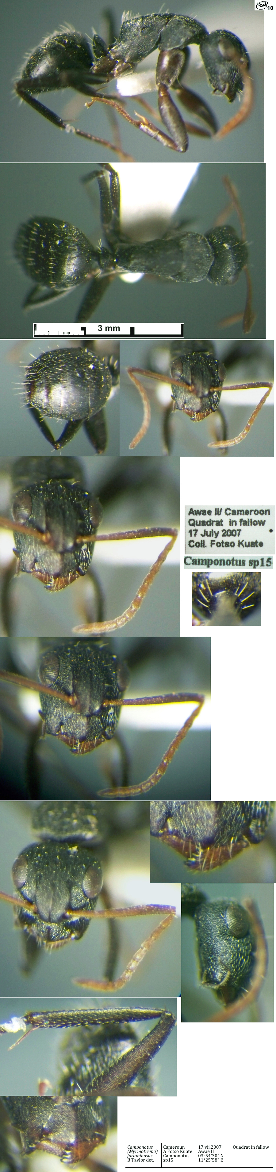 The Ants of Africa